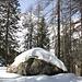 <b>La neve è abbondante e spesso non portante. Affrontiamo la salita verso l'Alpe Cadonighino lungo il sentiero (nascosto dalla neve) che porta al Passo Venett e alla Capanna Leìt. </b>