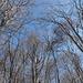 Nel bosco verso il Motto d'Arbino...