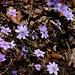 Frühling im Abstieg zum Thunersee