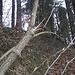 Torbogen der Natur beim Eingang zum Wittobel.