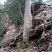 Wenige Meter über der Hütte steilt die Rippe auf, um eine bewachsene Sandsteinmauer zu überwinden. Dieser Abschnitt war mir heute zu feucht, ich traversierte rund 40 Meter nach rechts an eine Nachbarrippe.