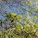 Frühling auf südländisch.