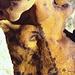 Uro dipinto su una parete della grotta di Rouffignac. (photo La Goélette)