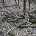 Hier hat die Motorsäge gewütet. Warum stört der Mensch die Totenruhe der Bäume, wenn er sie nachher einfach liegenlässt?