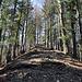gemütlicher Waldweg und Aufstieg über einen breiten Sporn