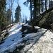 Der Aufstieg zum Hörnli führte uns über diesen schneebedeckten Waldweg.