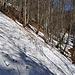 mühsame und vorallem steile Querung im Cholwald, der eigentliche Wanderweg ist noch vollständig mit Schnee bedeckt