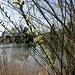Frühlingsboten auch am Ziegelweier