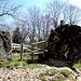 eindrücklich: Älbacher Lochstein und die gestürzte riesige Eiche