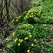 Blumenpracht am Waldrand