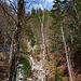 Wald und Bach