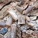 Strange fossils litter the ground