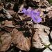 Laubsynphonie im Frühling... mit vielen Zecken