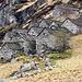 Monte del Corgell 1314m liegt rund achthundert Meter oberhalb Corippo