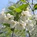 Frühling !!
