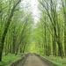 Frühlingsgrün im Bockmer Holz