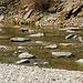 Flussbett mit vielen flachen Steinen beim Pian di Alne