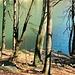 Bäume am Lago de Buseno.