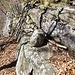 Wegzeichen besonderer Art - ein Stein erleichtert die Überwindung einer kleineren Felsstufe