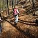 Il bosco di faggi ben regolato
