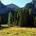 Eine bezaubernde Waldlichtung oberhalb der Königstalalm mit dem Windschartenkopf darüber