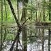 Zauberwasserwald