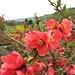 Blütenpracht beim Weile Wole