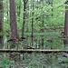 Moorlandschaft oder<br />[http://www.meteorit.org/fricker/seen/huettwilersee.htm]