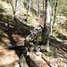 Büßerbaum - irgendwie hat es sich eingebürgert das jeder der hier hoch und runtergeht einen Stein hinlegt.