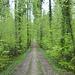 Es geht durch den Frühlingswald