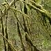 Verwunschen wirkende Bäume säumen die Ufer