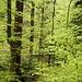 Frühlingswaldzauber
