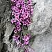 Wunderschöne Blumen am Wegesrand