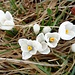 doch etwas Frühlingsstimmung