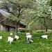 Es ist Frühling - Flora und Fauna leben auf