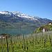 Weinberg oberhalb von Quinten