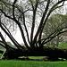 Aus der Baumruine wachsen Holztentakel!