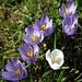 Frühling! Spring! Primavera! Renouveau!