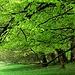 Das Grün im Fluss