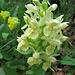 und wieder Orchideen