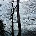 Der interessante Baum beim Ausstieg im Gegenlicht.<br />Die Hitze sieht man nicht, ein Foto ist halt doch immer ein bisserl was Unvollständiges. :-)