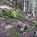 es geht durch den Wald