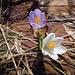 la primavera e i suoi colori sul Monte Pizzoccolo