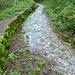 Strada/torrente della Val Canasca