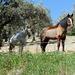 Andalusische Pferde I - speziell geschoren