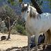 Andalusische Pferde II