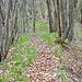 Eine Abstiegsmöglichkeit vom Großen Gleichberg besteht am Ostrand des Römhilder Steinbruchs. Streckenweise ist die Pfadspur schwer erkennbar und steil.