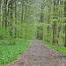 Rückweg nach Waldhaus durch eine Waldallee.