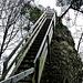 die Himmelstreppe mit 80 Stufen aufs Guggershörnli