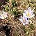 Frühlingserwachen auch auf Merlen
